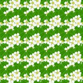 Strawberry_patch_blooms_and_leaves_shop_thumb