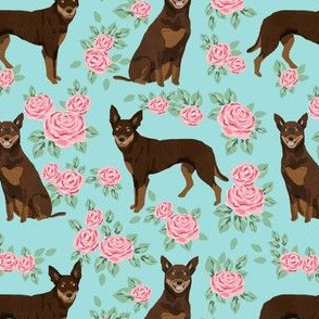 australian kelpie dog fabric red and tan kelpie design - roses - light blue