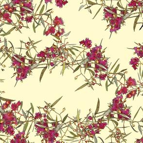 Eucalyptus leucoxylon rosea –Wall Trellis fffbcf