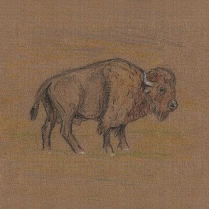Bison or Buffalo