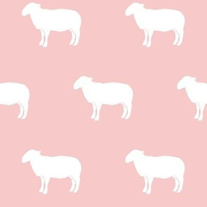 sheep on pink