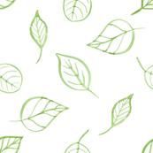 Watercolor leaves contours