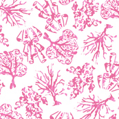 Coral_NEW_dark_pink_and_white