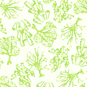 Coral_NEW_lime_and_white