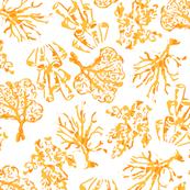 Coral_NEW_orange_and_white