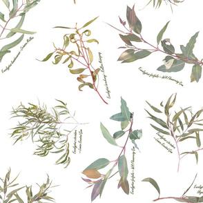 Eucalyptus foliage collection on white for Wallpaper