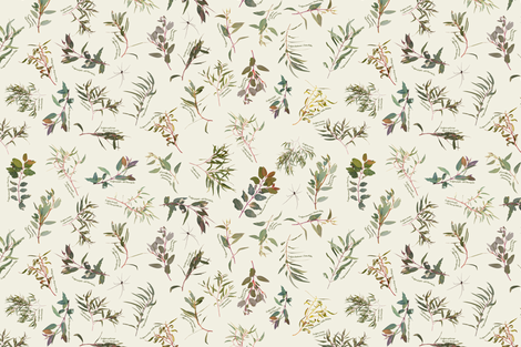 Eucalyptus foliage collection on Neutral f1efe2 fabric by emily_bieman on Spoonflower - custom fabric
