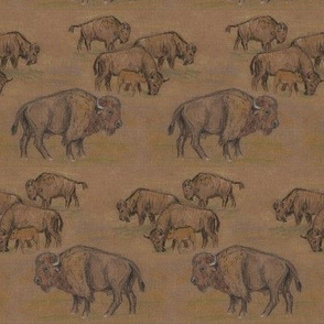 Bison Buffalo Herd