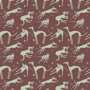 whippet-greyhound-dk