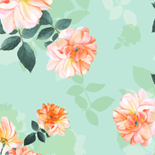 English roses bush