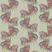 Gulf Fritillary Butterfly Kisses