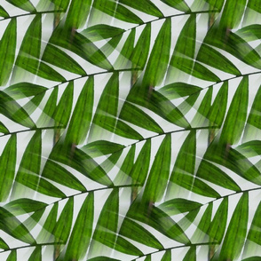 palm_fronds_1