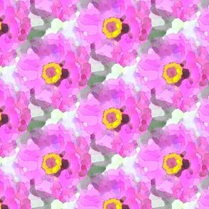 zinnia in pink