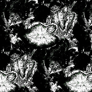 Caladium abstract in Black and White