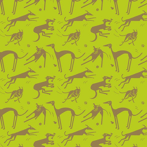 whippet-greyhound-lime