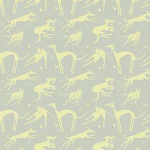 whippet greyhound - yellow gray
