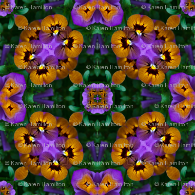 Pansy_Infinity_2