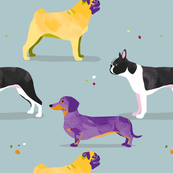 Dogs in the park // grey blue pug dachshund boston terrier sausage dog spots