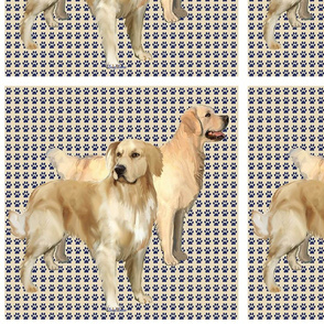 Golden Retriever squares