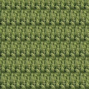 Green Grape Fractalicious