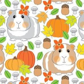 fall guinea pigs