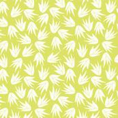 succulent aloe vera lime