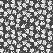 succulent aloe vera charcoal