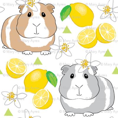 guinea-pigs-and-lemons-on-white