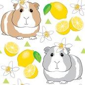 Rguinea-pigs-with-lemons-on-white_shop_thumb