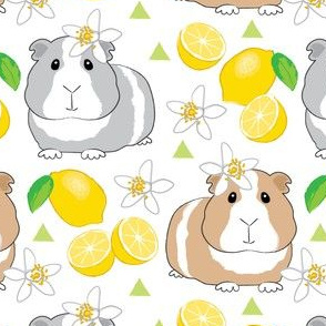 guinea-pigs-and-lemons-on-white