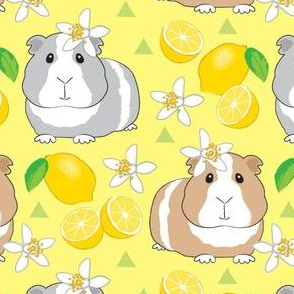 large guinea-pigs-with-lemons-on-yellow
