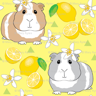 guinea-pigs-with-lemons-on-yellow