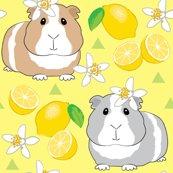 Rguinea-pigs-with-lemons-on-yellow_shop_thumb