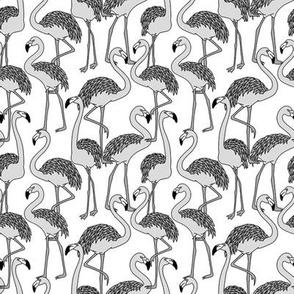 flamingos - b/w