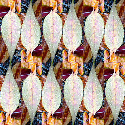 Rrrleaf_collage_1_preview