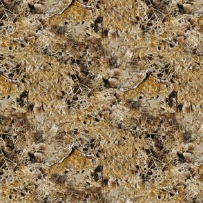 Bacterial mats