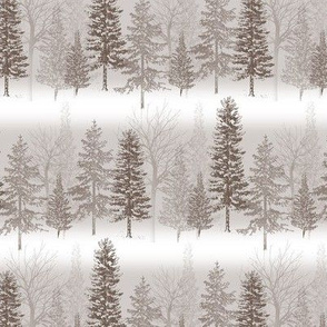 frosty forest - forest trees