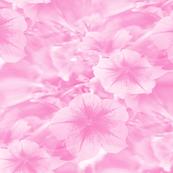 Petunias in Pink