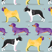 Dogs in the park / purple yellow black white pug dachshund boston terrier