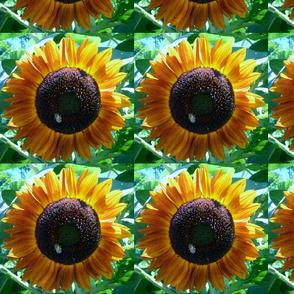 Busy Bee Sunflower