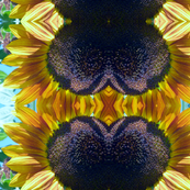 Psychedelic Sunflowers