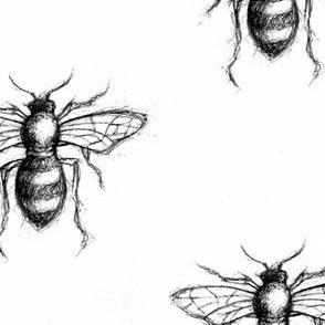 Bee Sketch Print