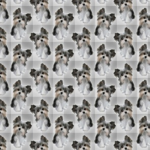 Puppy on Plaid - Shades of Grey
