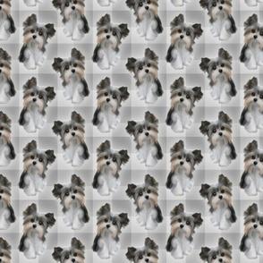 Puppy on Plaid - Shades of Grey