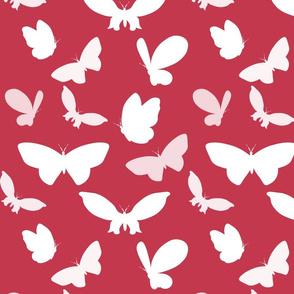 Butterflies magic