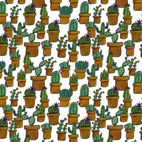 Cactus_jungle-01