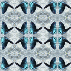 Blu Butterfly TENN-G IMG_0382
