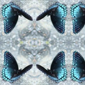 Blu Butterfly TENN-F IMG_0382