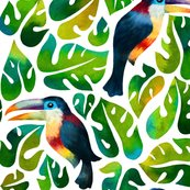 Toucan_aracari_shop_thumb