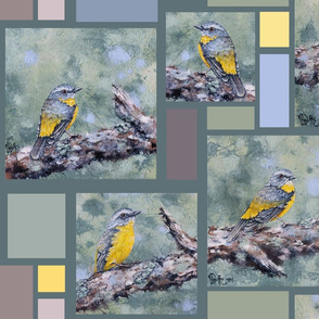 eastern_yellow_robins